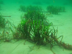 Sea Grass Beds